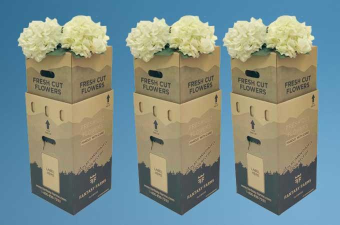 Fantasy Flowers Packaging