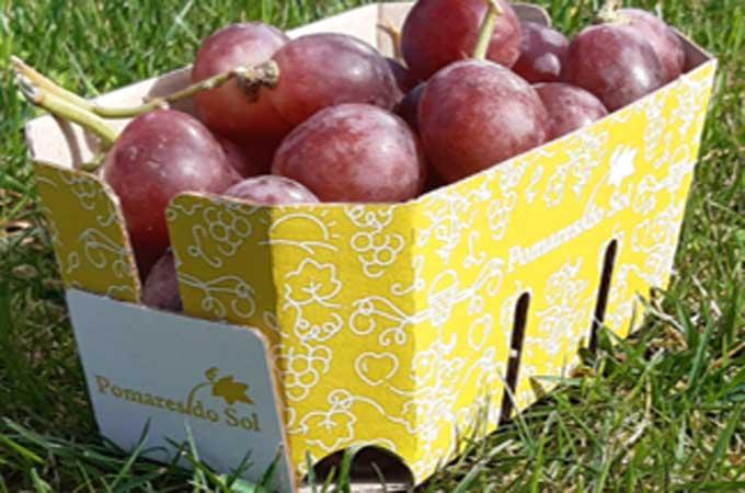 Fruit punnets. Grape punnets