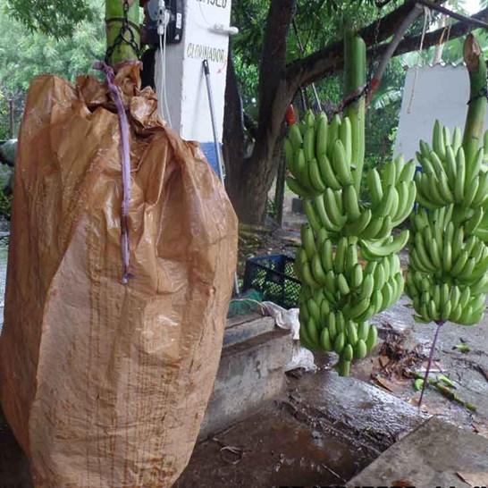 Banabag Banana Bagging Hanging