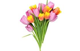 Flowers-JPG