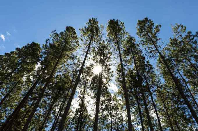Forest Chain of Custody
