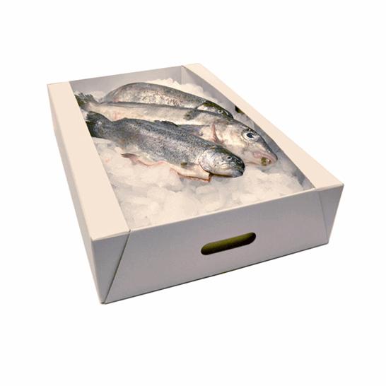 Trays_Fish