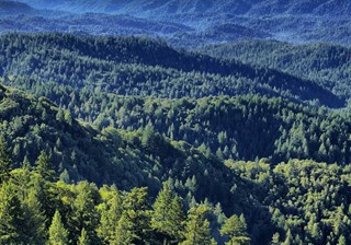 Forestry