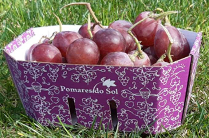 Grape Punnet Packaging