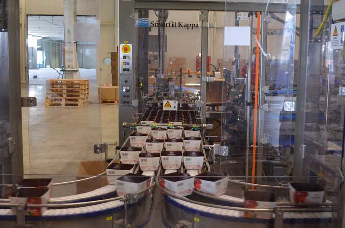 Punnet Packing Automation