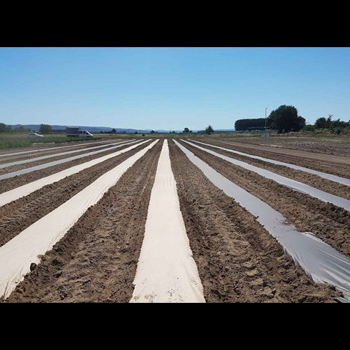 AgroPaper